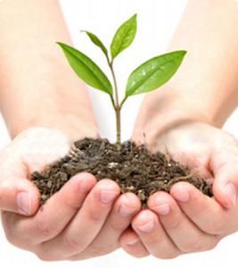 plant-groei